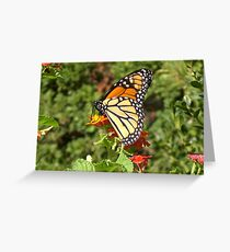 Monarch Butterfly I Greeting Card