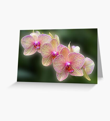 A Stem of Orchids Greeting Card