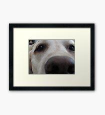 Nosy Dogs Framed Print