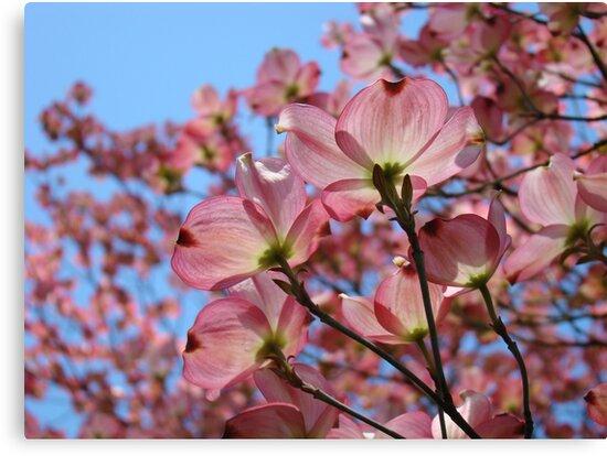 Dogwood flowers pink dogwoods tree art baslee troutman canvas dogwood flowers pink dogwoods tree art baslee troutman by basleeartprints mightylinksfo