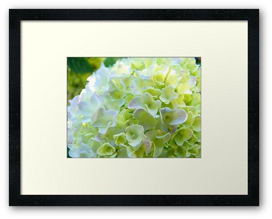 Paster white yellow green hydrangea flowers art framed prints by paster white yellow green hydrangea flowers art by basleeartprints mightylinksfo