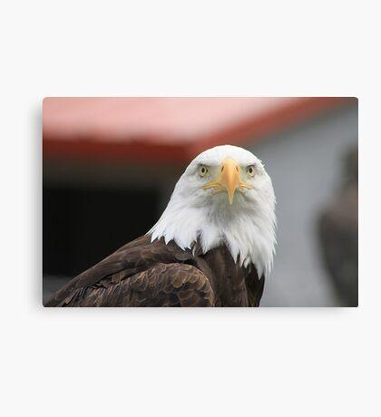 """Bald Eagle - """"Jefferson"""" Metal Print"""