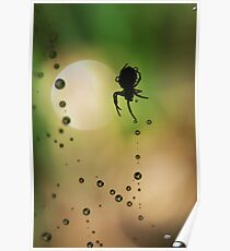 Spider Sillouette Poster