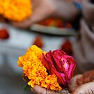Marigolds and Roses, Bijaipur by nekineko