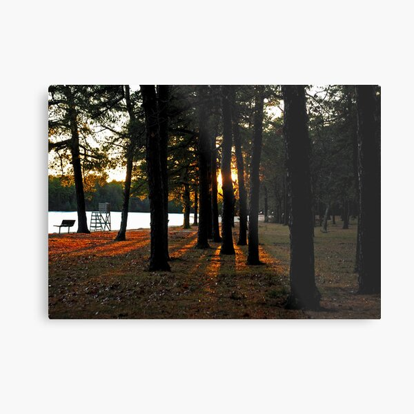 Sunset Perspective in the Pines Metal Print
