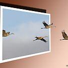 Sandhill Cranes by DigitallyStill
