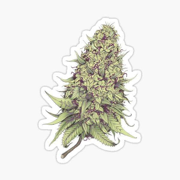 Cannabid Purple Indica Hybrid Marijuana Purple Gorilla  Cannabis Sticker