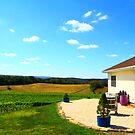 Winery Grape Field by DmitriyM