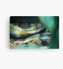 Snakey Scales Canvas Print