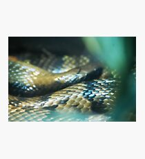 Snakey Scales Photographic Print