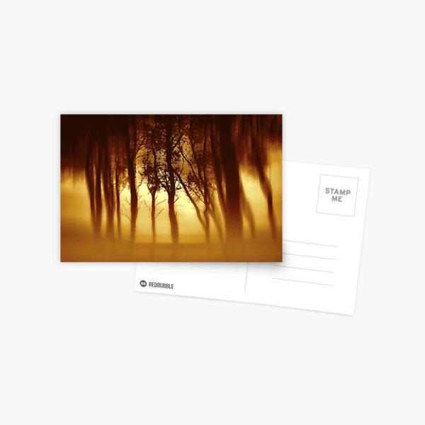 Morning Tree Silhouette(Sepia) Postcard