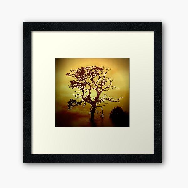 Evening Tree Framed Art Print