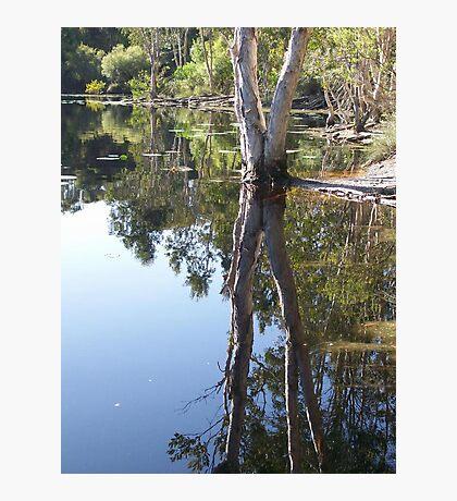 Refecting Trees Photographic Print