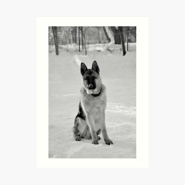 Staying watch - German shepherd Art Print