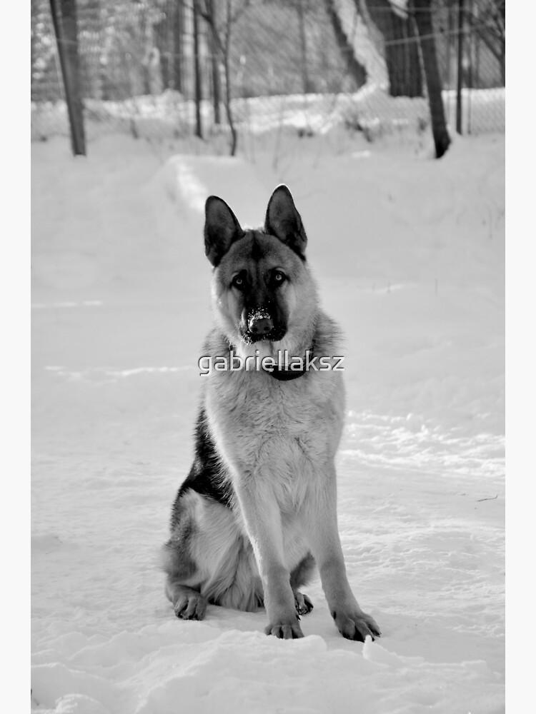 Staying watch - German shepherd by gabriellaksz