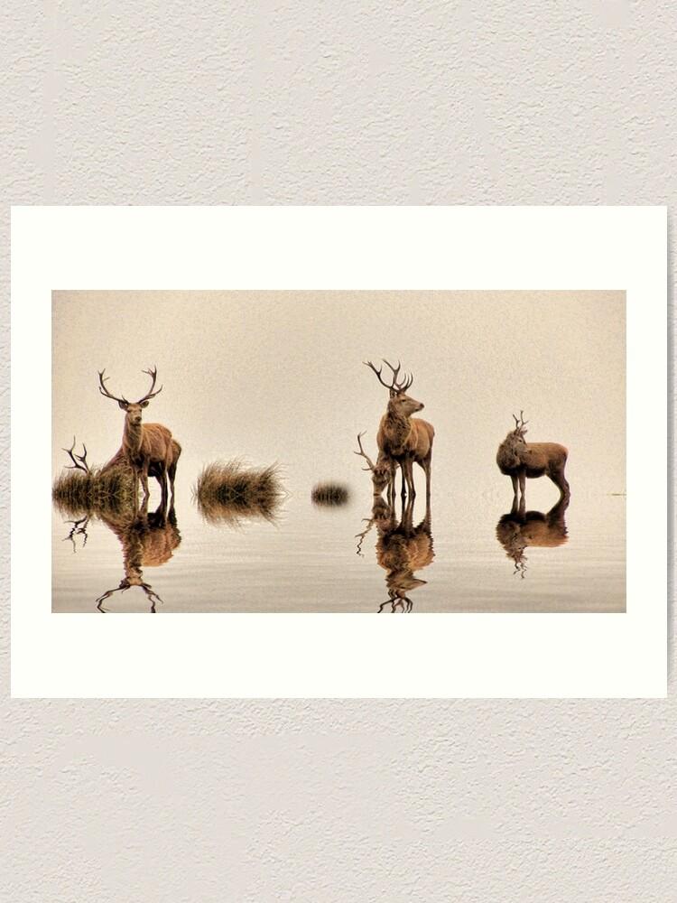 Alternate view of Deer on the Water Art Print