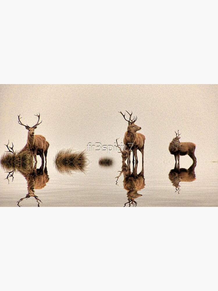 Deer on the Water by fr3spirit7