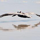 Pelican Shadow by MaryLynn