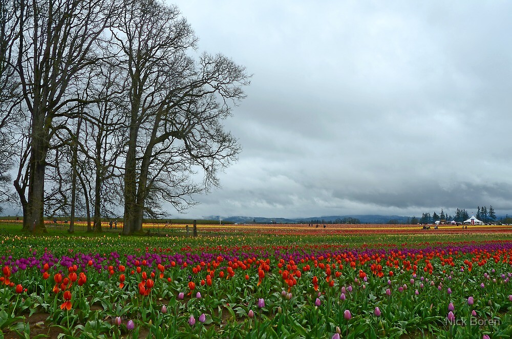 Wooden Shoe Tulip Farm Landscape by Nick Boren