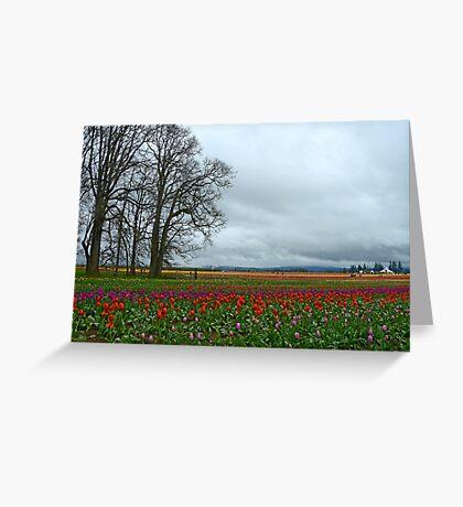 Wooden Shoe Tulip Farm Landscape Greeting Card