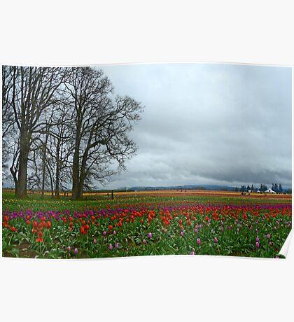 Wooden Shoe Tulip Farm Landscape Poster