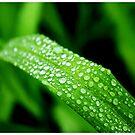Sweaty Leaf by MaryCatherine27