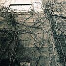 Secret Window by MaryCatherine27