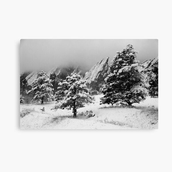 Winter Wonderland Walk Canvas Print
