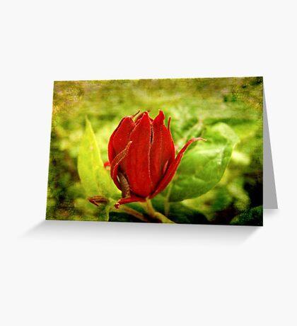 Stop bugging me ©  Greeting Card