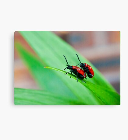 At The End of the Leaf Canvas Print