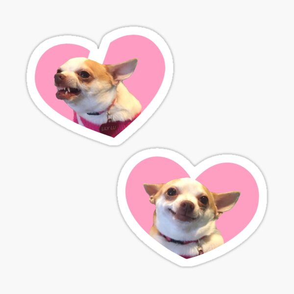 Angry Chihuahua / Happy Chihuahua Meme Pink Heart Design Pegatina