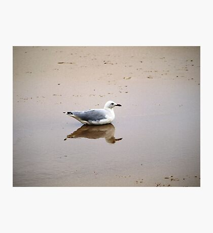 Bird in Reflection Photographic Print