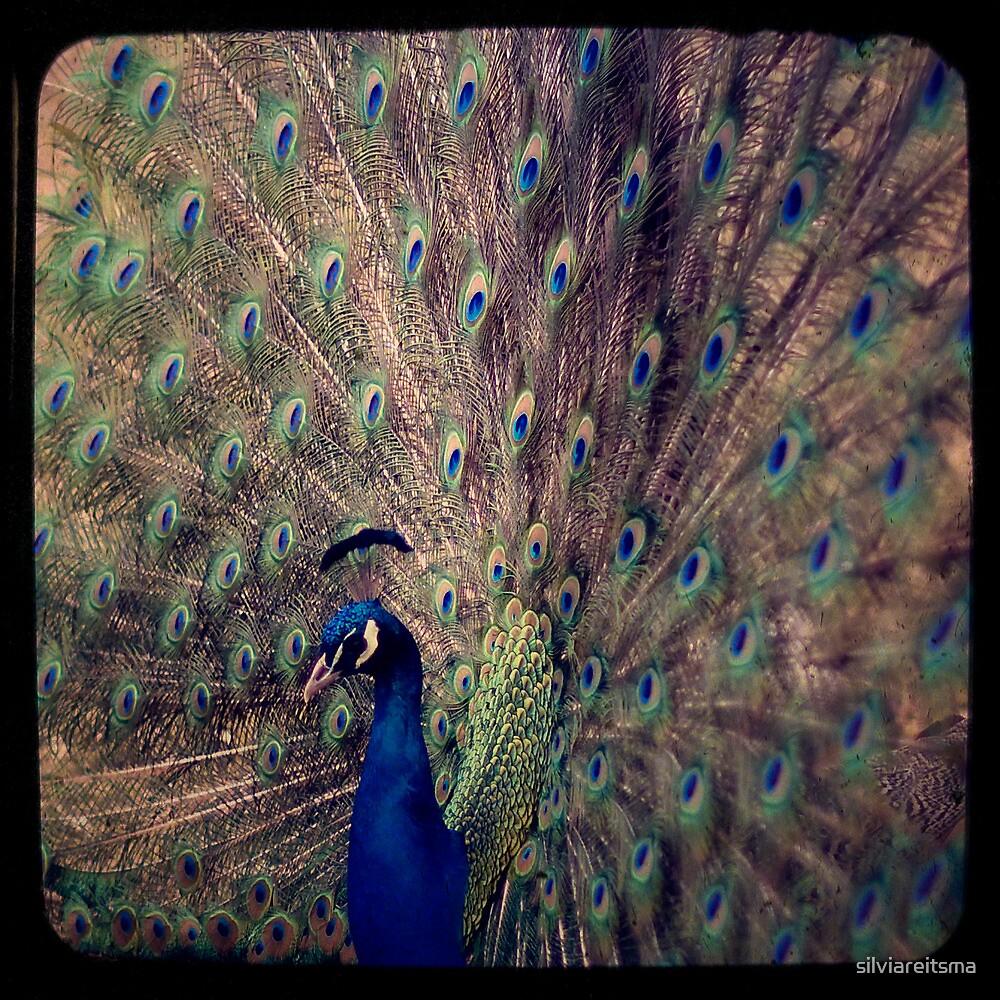 Peacock by silviareitsma