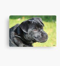 puggy pup Canvas Print