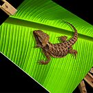 Lizard on Canvas by Susie Hawkins