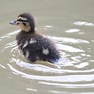 duckling in a hurry  by yampy
