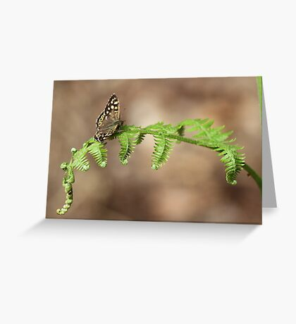 Brown Butterfly Greeting Card