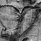 Carved Heart by Samantha Higgs