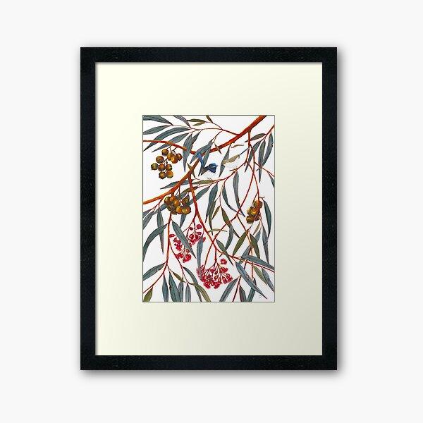 Fairy Wrens Framed Art Print