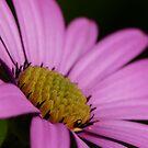 Garden Flower by SAngell