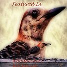 The Woodpecker by Pat Moore