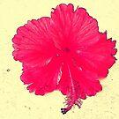 A Tropical Hi by islefox