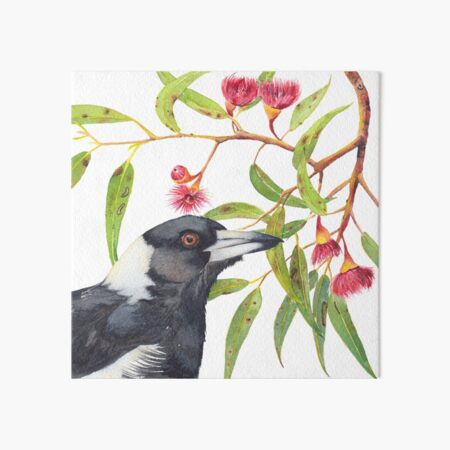 Australian Magpie and eucalyptus blossoms watercolour painting Art Board Print