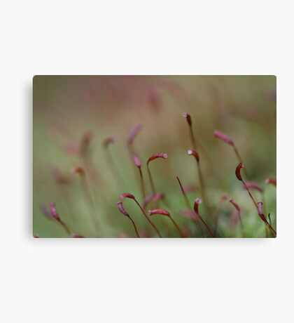 Spring in Washington State-6 Canvas Print