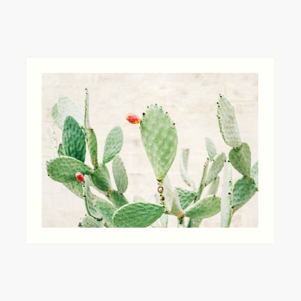 Green cacti | Pastel colored cactus with colorful flowers in Ostuni, Puglia Italy Art Print