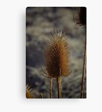 Natures Spikes Canvas Print
