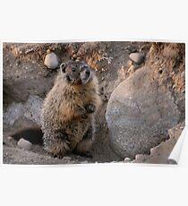 Marmot Sunset Poster