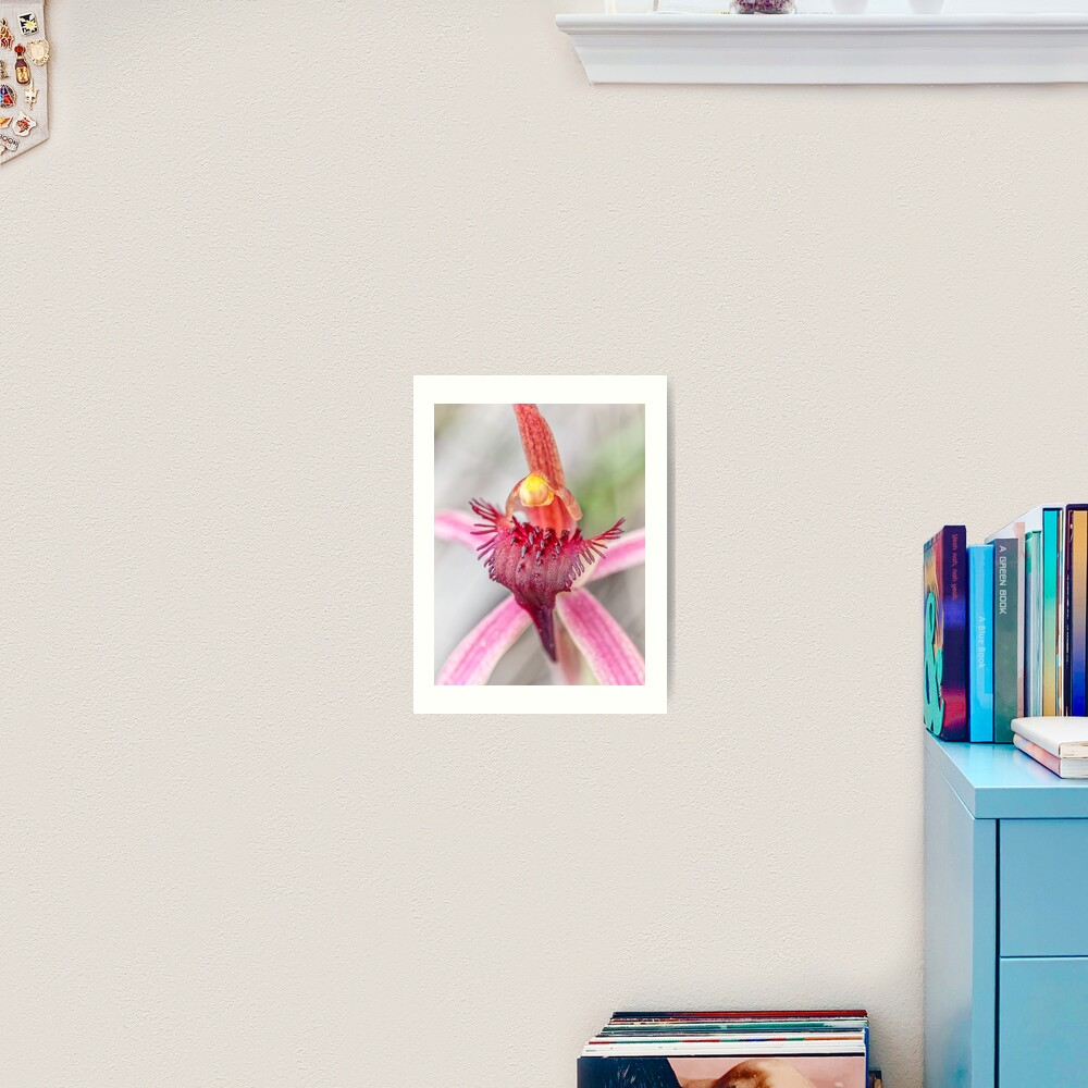 Tailed Spider Orchid Art Print