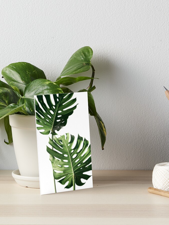 Tropical Exotic Leaves Plant Photography Art Board Print By Magdaopoka Redbubble Great savings & free delivery / collection on many items. redbubble