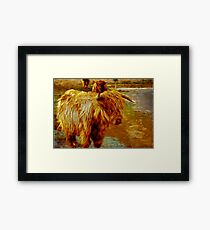 Highland Cattle Framed Print
